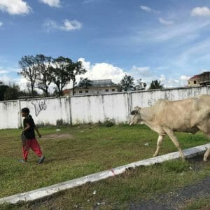 kampot-koe