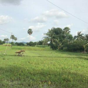 kampot-sugarcane