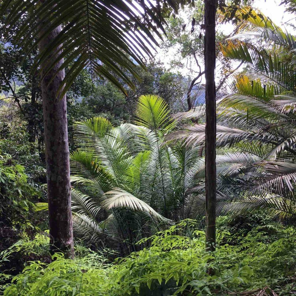 Penang-National-Park-Overzicht