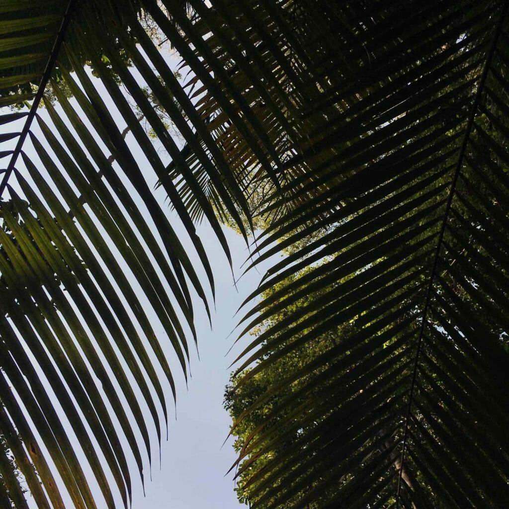 Penang-National-Park-door-de-bladeren-heen