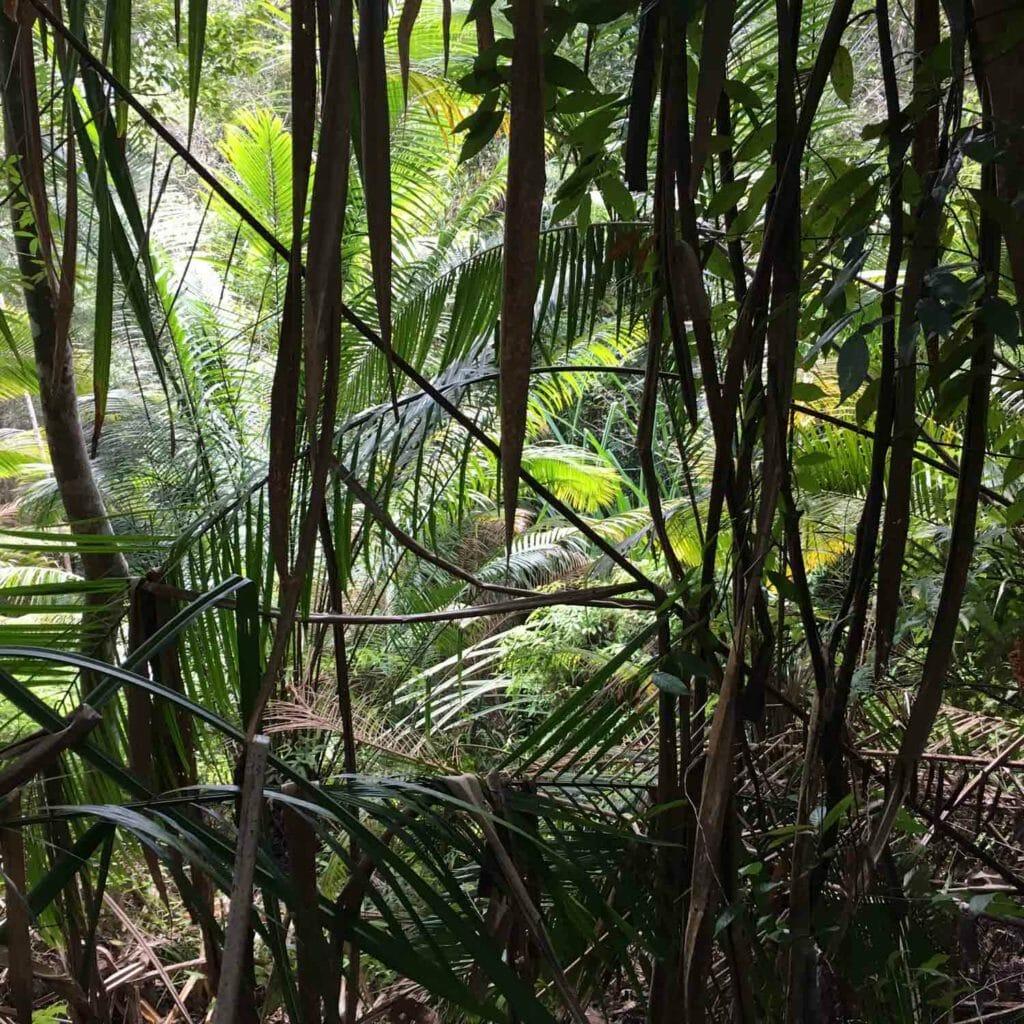 Penang-National-Park-nog-een-Overzicht