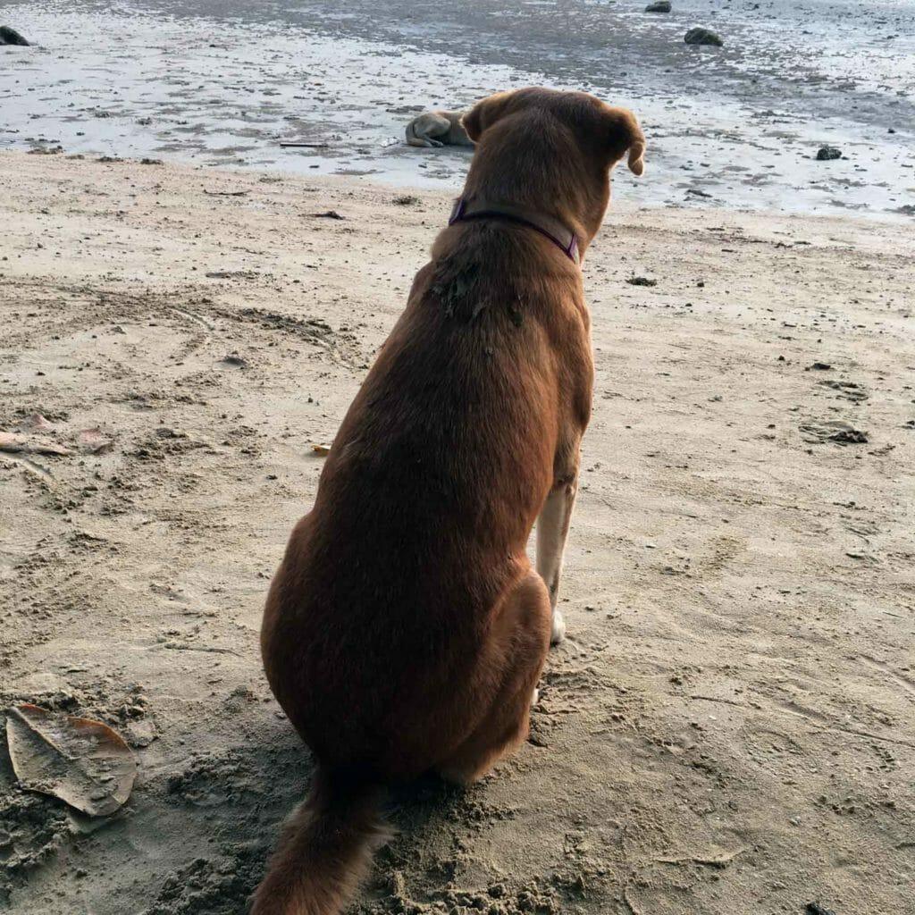 El-Nido-Dog-Beach-Corong-Corong