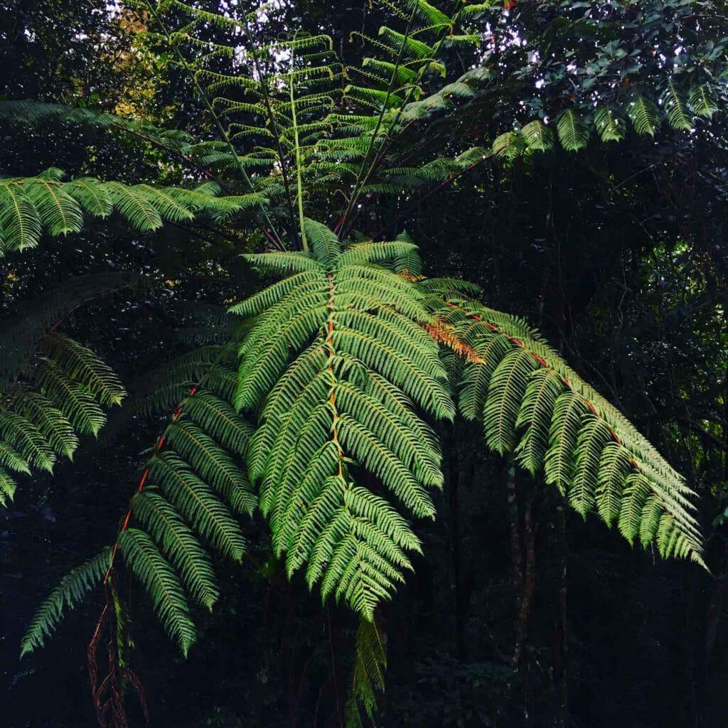 Kota-Kinabalu-Taman-Kinabalu-Plant