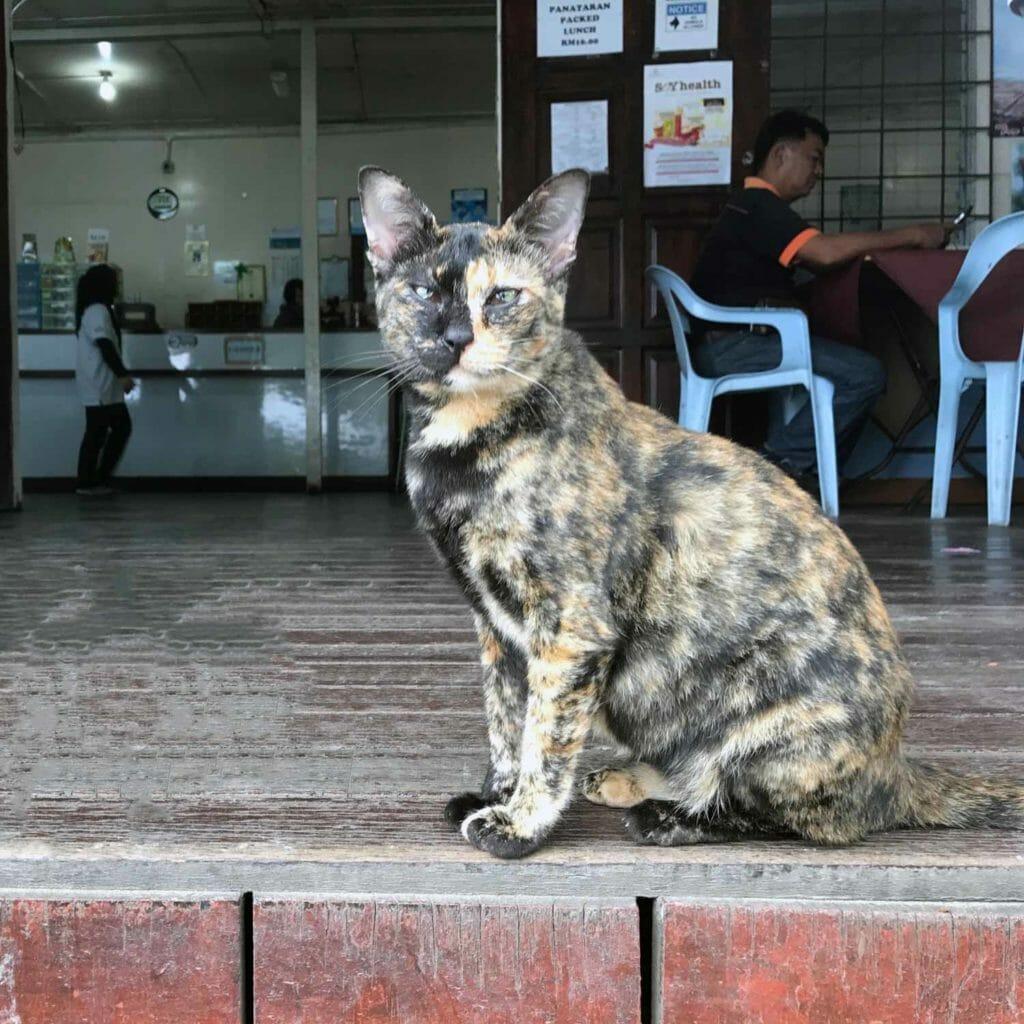 Kota-Kinabalu-Taman-Kinabalu-Cat