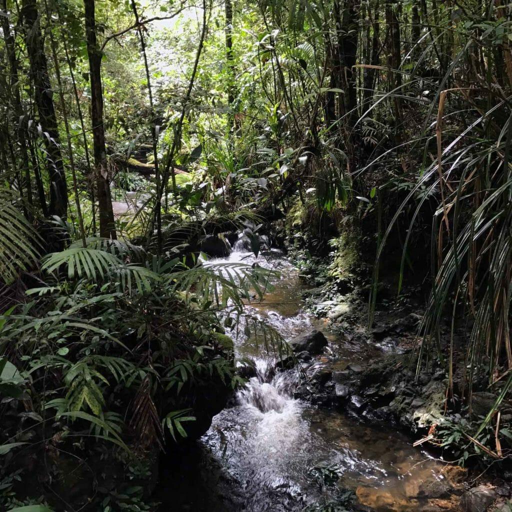 Kota-Kinabalu-Taman-Kinabalu-River
