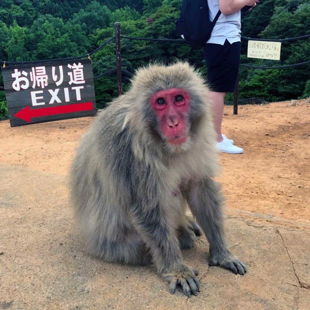 Japan Kyoto Apen Rots Aap 03
